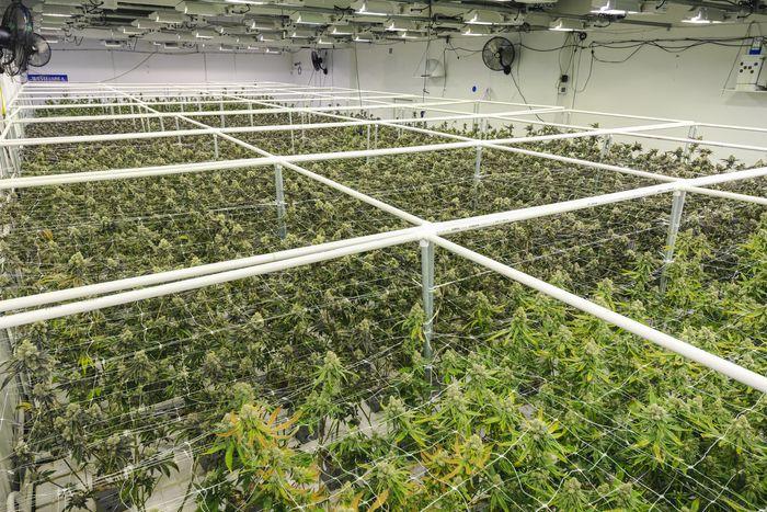 Почему пенсионерам нужно избегать акций марихуаны и SPACs